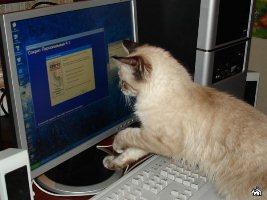 скачать игру про кота на компьютер через торрент бесплатно - фото 8